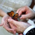 suelta_de_mariposas_boda_15