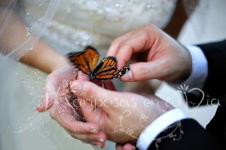 Mariposas en boda