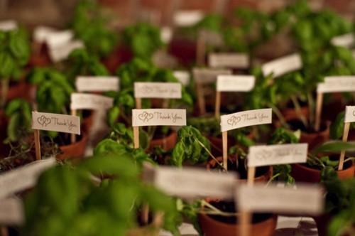 plantas y semillas como regalo para invitados de boda y