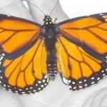 mariposas-en-tu-boda